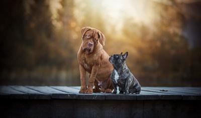 Fruchtbarkeit Hund